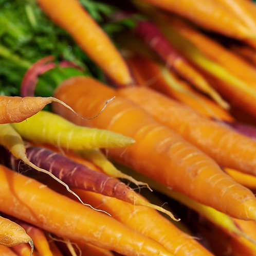 Carrot Rainbow Mix Compostable Seed Tape ~ Approx 600 Seeds