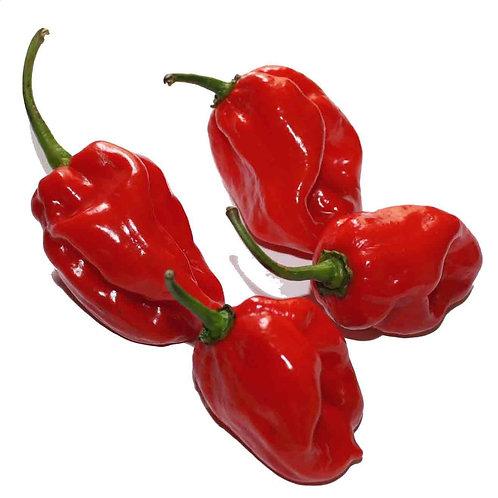 (Sow Jan-April) Organic Maya Red Habanero Seeds (Pack of 60) - Very Hot