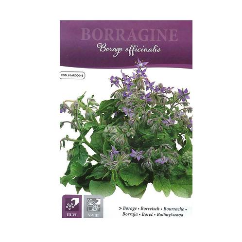 (Pollinator) Italian Borage  Pictorial Packet- (1.5gm Seeds)