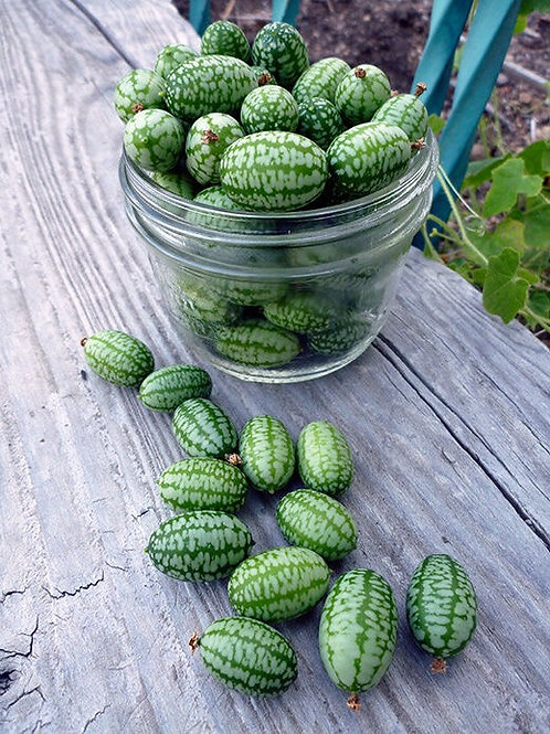 (Sow April  & May) Cucamelon Fruit Seeds (Pack of 65 Seeds)