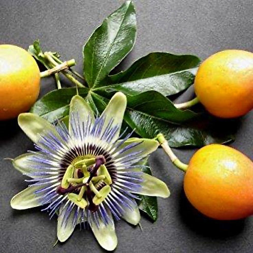 Edible Flowers Passion Fruit Seeds (Pack of 45 Seeds)