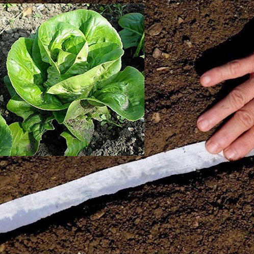 Lettuce Little GEM Compostable Seed Tape - Approx 600 Seeds