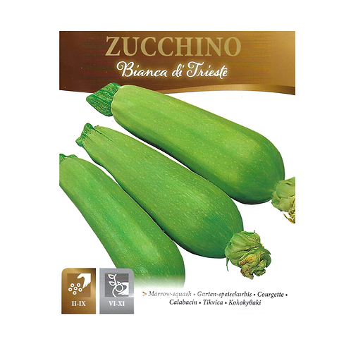 Courgette 'Zucchini' Bianca Trieste - Approx 38 Seeds