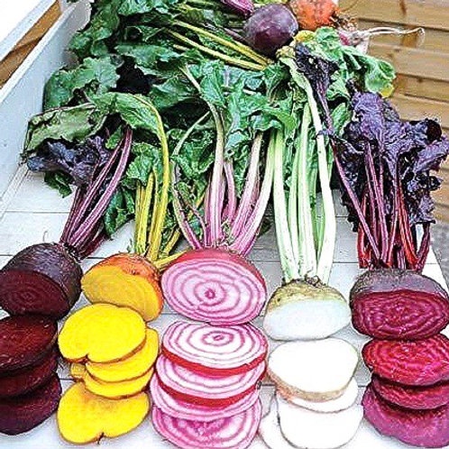 Beetroot Rainbow Compostable Seed Tape Mix ~ Approx 300 Seeds