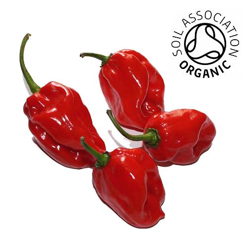 Hot Chilli Pepper Habanero Maya Red Organic - 60 Seeds
