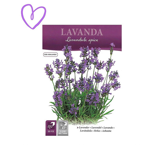 Lavender Herb Seeds Pictorial Packet (0.5gm)