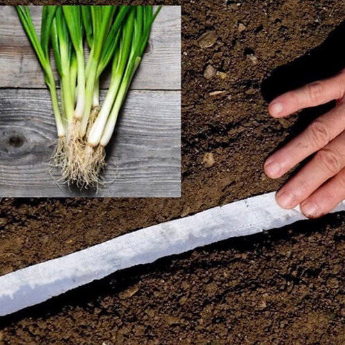White Spring Onions Compostable Seed Tape (500 seeds)