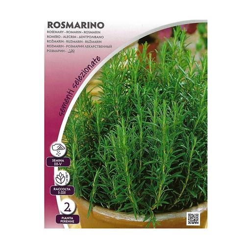 Italian Rosemary Herb Pictorial Packet - (Approx 135 Seeds)