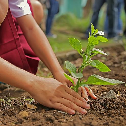 Plant A Tree in Australia - One Tree Planted