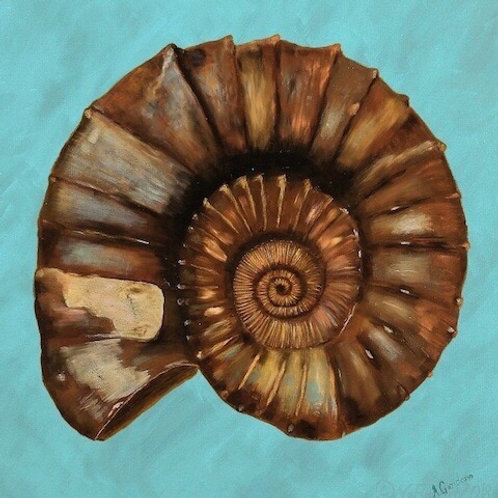 Ammonite on Blue