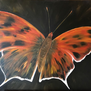 """""""?"""" Question Mark Butterfly By Andrea Giordano"""
