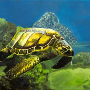 Sea Turtle By Andrea Giordano