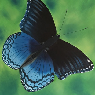 Blue Butterfly By Andrea Giordano