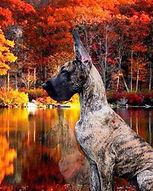 Kiya_autumnal.jpg