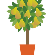 citrus, plants, plantas
