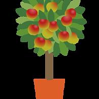 citrus, fruits, frutas, plants