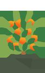 citrus, fruits,plants, frutas, plantas