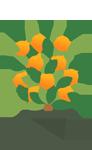 citrus, plants, fruit