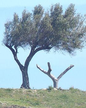 tree-5455_1920_edited.jpg