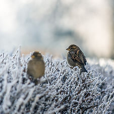 birds frozen grass (1).jpg