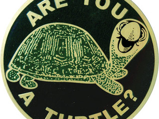 Are you a Turtle?