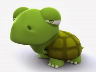 Welcome all new Turtles!