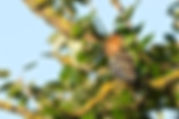 UPUPA-ERC_7186-S.jpg