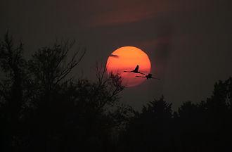tramonto con fenicotteri.jpg