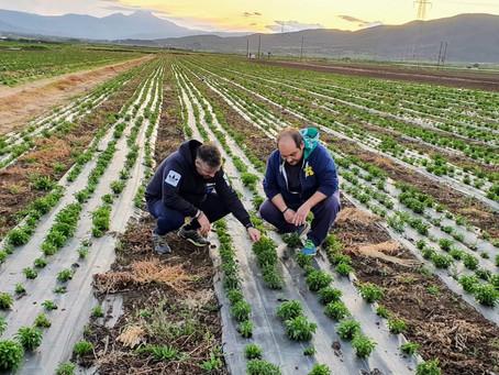 Κατατέθηκε η τροπολογία για τους εργάτες γης που είναι εγγεγραμμένοι στον ΟΑΕΔ