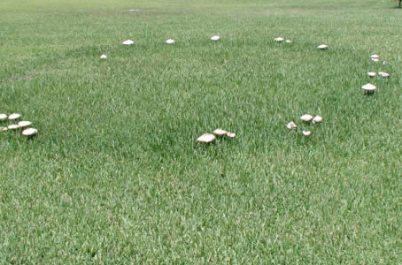 What are Fairy Rings?
