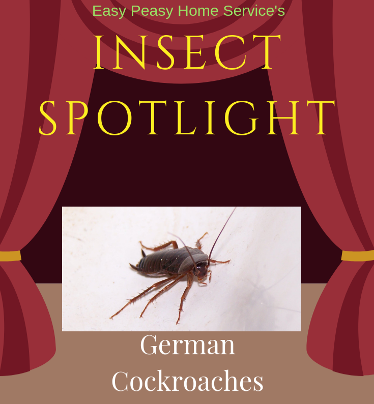 Insect Spotlight - German cockroach
