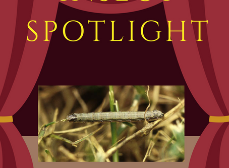 The Insect Spotlight