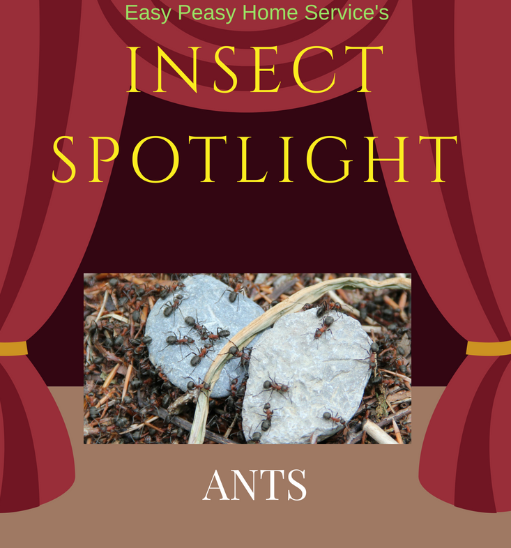 Insect Spotlight - ants