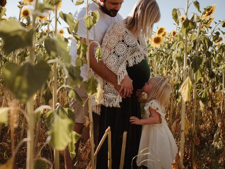Sunflower Field Maternity Session   Half Moon Blooms U-Pick Flowers