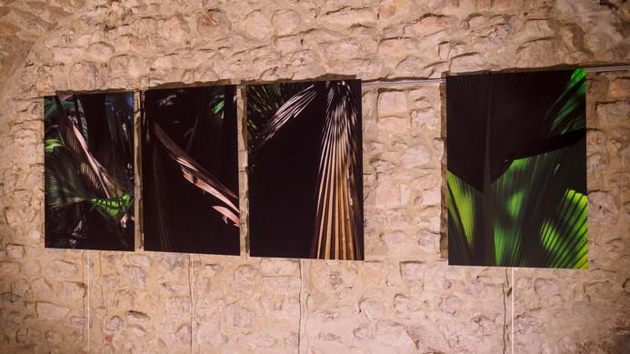 Les songes verts du Black Parrot