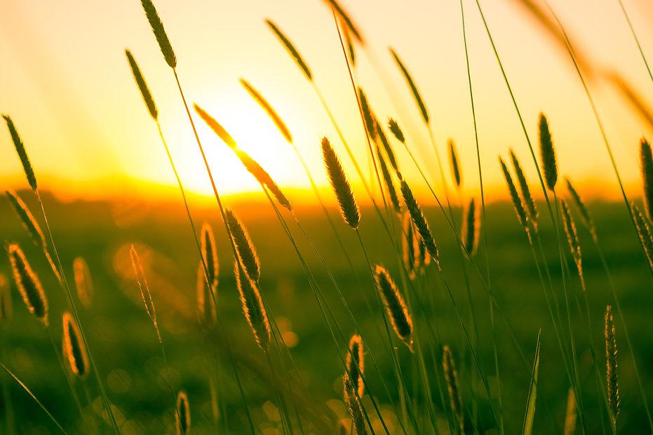 summer-sun-warmth-field-9568.jpg