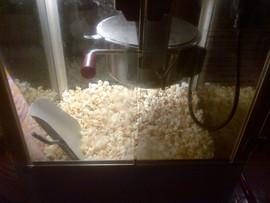 popcorn-machine-for-hire.jpg