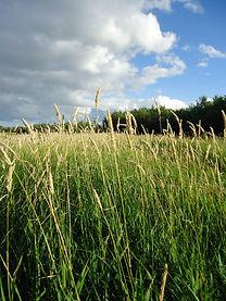 flowwebsitegrass.jpg
