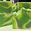 Thumbnail: Soap - Margarita