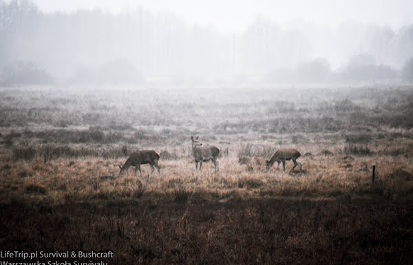 Spalone żeremie. Rolnicy coraz częściej dostają pozwolenia na wypędzenie bobrów ze swoich ziem. To jeden ze sposobów. Bobry najczęściej przeżywają i odchodzą w inne miejsce.