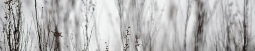Magiczna łąka