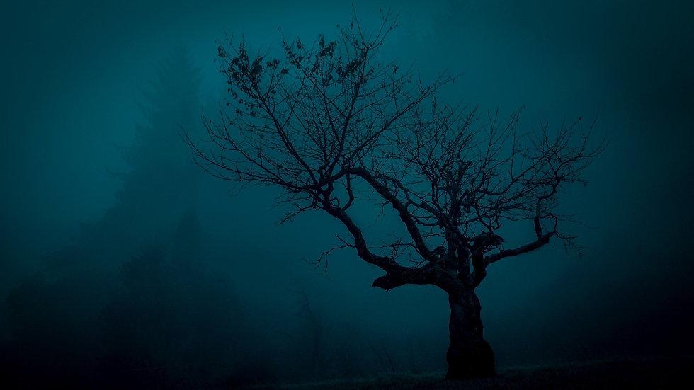 Spooky tree in fog
