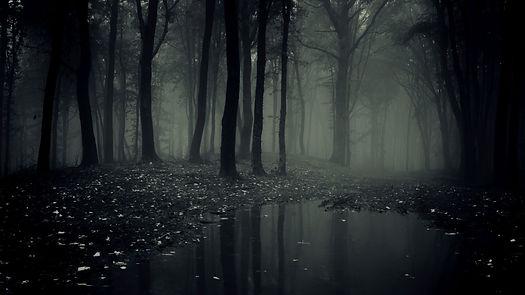 dark-forest-wallpaper-hd.jpg