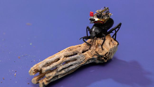 camera-scarabée