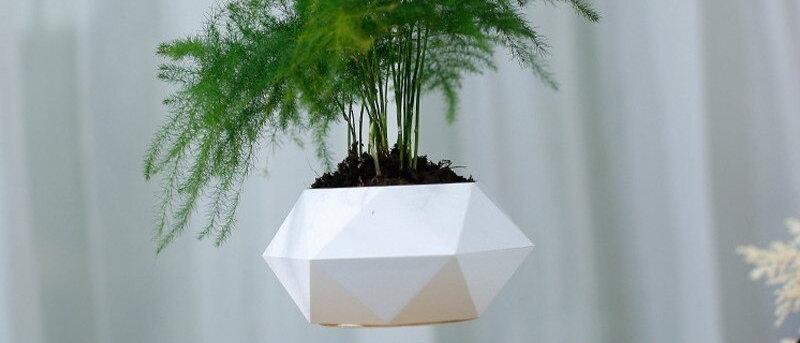 Ava Tree - Pot de fleur en lévitation