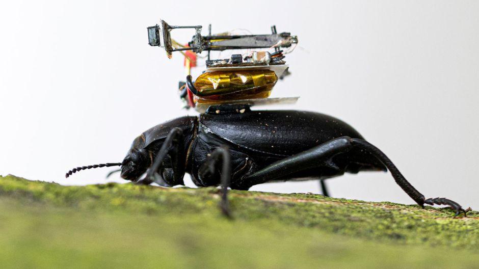 caméra-miniature-scarabée
