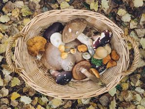 Magic mushrooms: make more room for shrooms