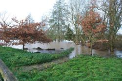 Hessay Pond, Nov 21st 2014