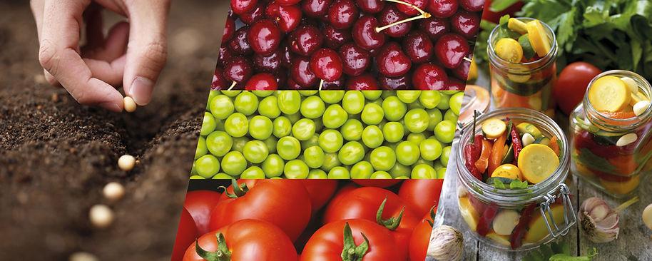 Le Bocal Local - L'insertion au service de la capacité alimentaire des territoires