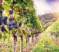 HC Califonia Wine.jpg